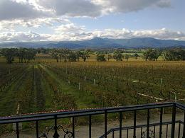 Yarra Yering vineyards front